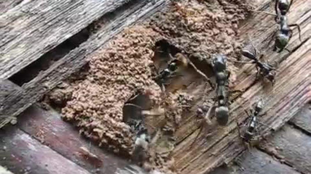 ants-vs-termites.mp4