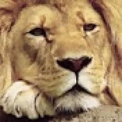 Sage Lion