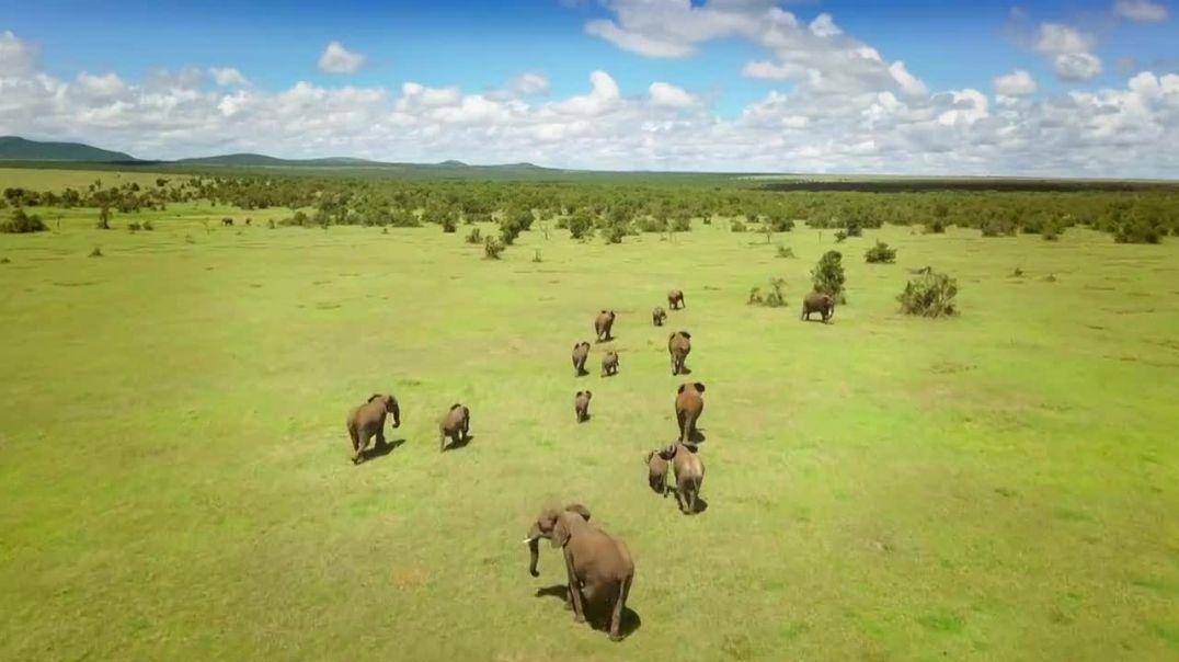 Secret Safari Into the Wild S01E06